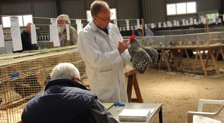 Ruim 800 dieren gekeurd op Kernhemshow in Ede, iedereen is nu welkom!